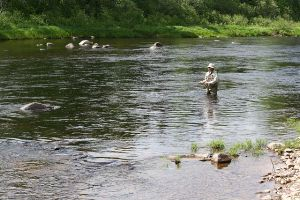 Angler tries his luck on the Northwest Miramichi