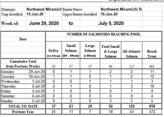 July Miramichi Salmon Report